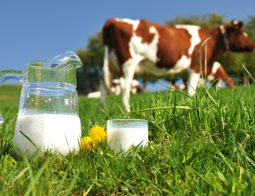 Qatar Is Becoming Self-Sufficient In Dairy Products