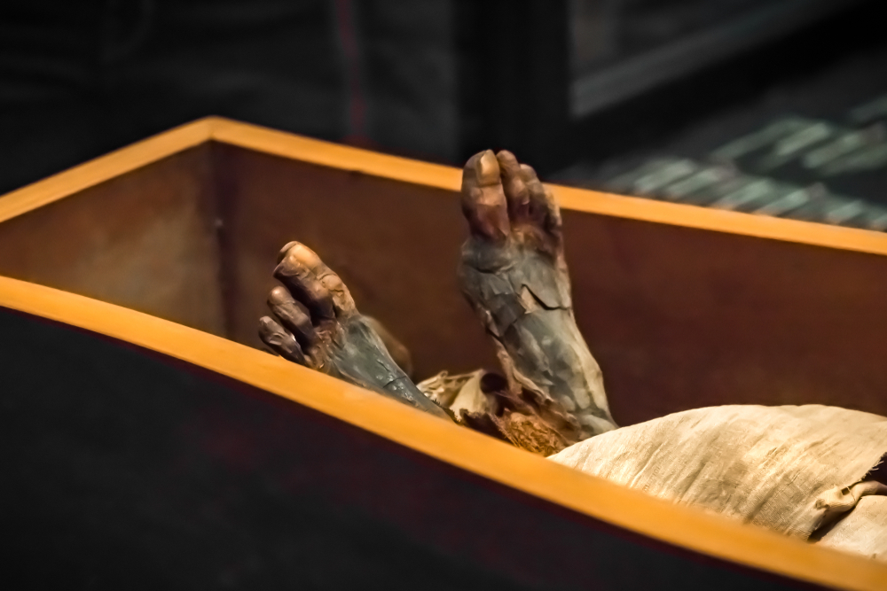 Nicholson Museum at the University of Sydney have found the mummy of Mer-Neith-it-es in an empty sarcophagus