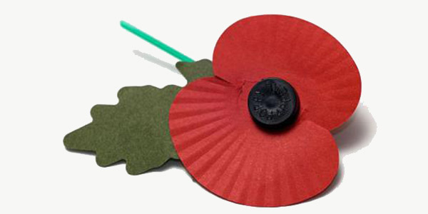 A29FKH Single remembrance day poppy against white background