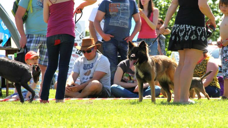 The Van Jamboree dog show challenged visiting pooches to show off for the chance of a prize. Photo: Emily Norton