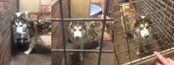 Police say the dog found on the South Common in Lincoln is very friendly and full of energy.