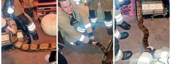 Gainsborough Fire and Rescue were called to rescue the 8ft long boa constrictor, which was trapped in a gas fire. Photos: Gainsborough Fire and Rescue