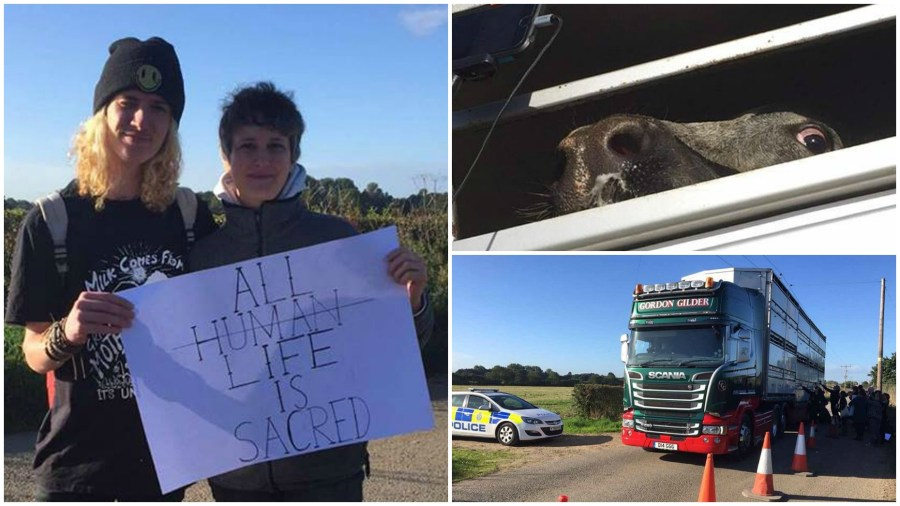 Protesters gathered outside Skellingthorpe slaughterhouse this morning to highlight the treatment of animals in passing lorries.