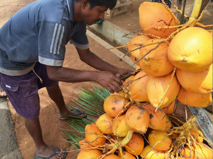 thelocalist.com-king-coconut-sri-lanka