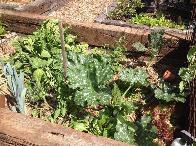 thelocalist.com-community-garden-sydney