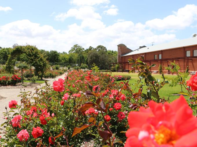 thelocalist.com-adelaide-botanic-gardens