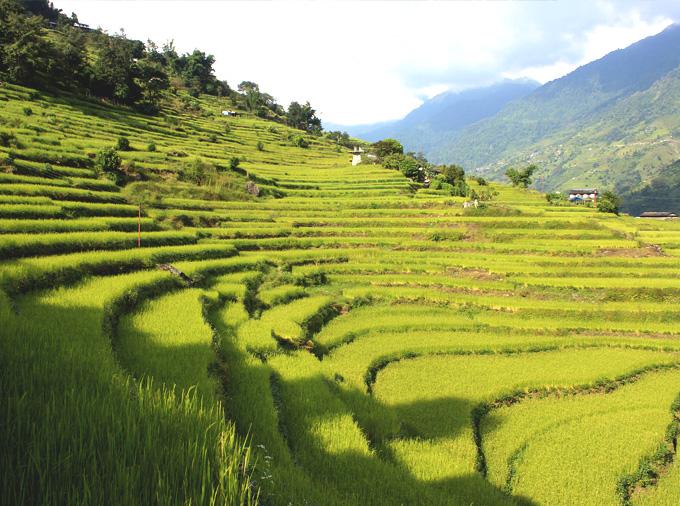 thelocalist.com-nepal-rice-4