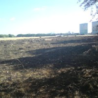 Bush fire on Wanstead Flats london…