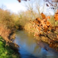 Return to the River Roding