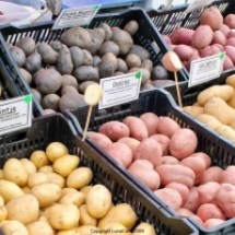 thumbs potatos University Farmers Market Early Fall 2011