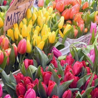 assorted-tulips-at-pike-place-market-april-09