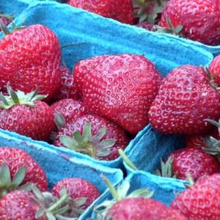 Honeoye Early Season Oregon Strawberries