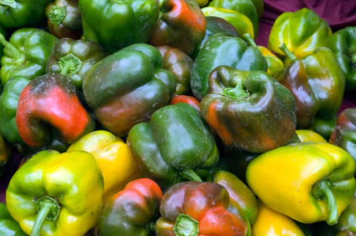 Rainbow Bell Peppers at Portland Farmers Market