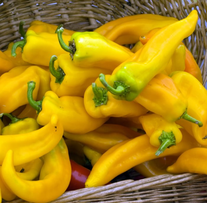 Yellow Italian Peppers at Portland Farmers Market