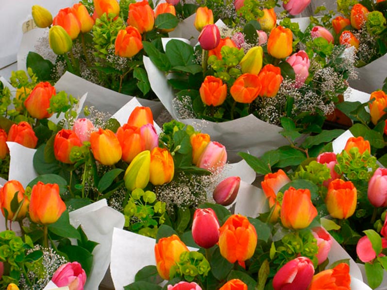 Northwest Tulips in an Array of Gorgeous Colors