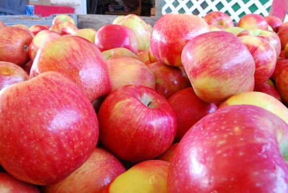 Hood River apples Apple Primer