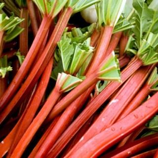 Rhubarb Primer