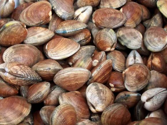 Tom Farmers Hood Canal Manila Clams at the Port Orchard Farmers Market Hood Canal Manila Clams with Spicy Orange Cilantro Butter