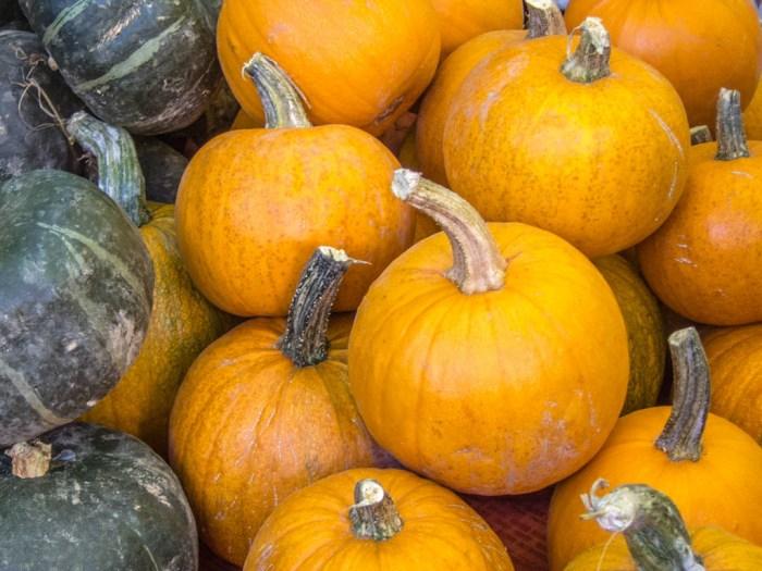 Portland Farmers Market Fall_Sugar Pie Pumpkin