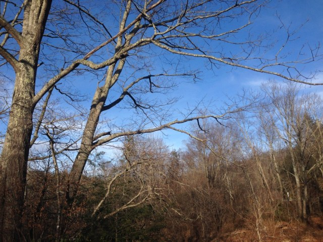 Winter Trees in the Sun