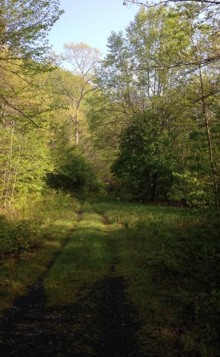 An evening walk through the forest