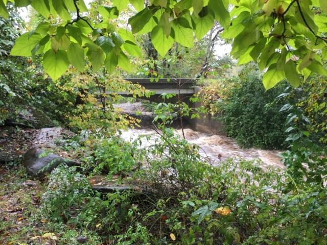 Brown's Creek in Burnsville, NC after a week of rain