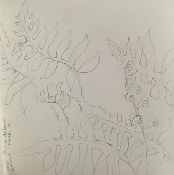 Sketch of Ferns, De Leon Springs, Wild Persimmon Trail, Florida