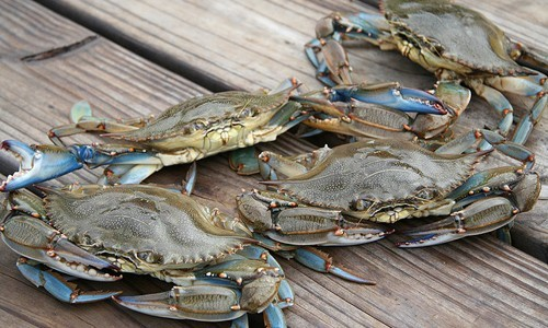 Blue_Crab_page_image