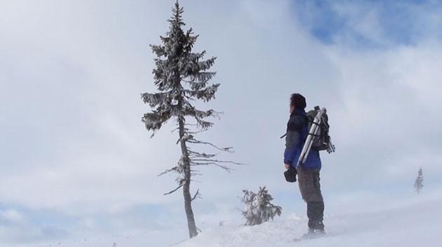 oldest-tree-old-tjikko-sweden-4