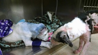 Dog Comforts Friend Who's Going Through A Tough Time