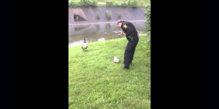 A Momma Goose Kindly Asked Police Officers To Help Her Gosling Who Was In Trouble