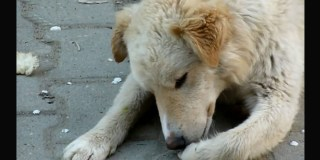 When They Found This Stray Dog He Had An Injured Paw – Now Watch As He Gets Help
