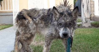 What Rescuers Thought Was A Starving Dog Living On The Streets Turned Out To Be So Much more.