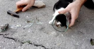 Men Rescue A Terrified Kitten With Its Head Stuck In A Glass Jar…Poor Thing