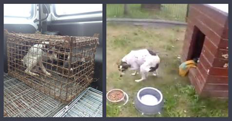 Dog Forced To Grow Up In A Rust Box Gets Emotional When She Touches Grass For The First Time