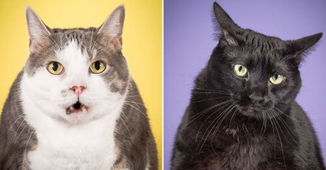 Photographer Takes Delightful Fat Cat Pictures To Show Chubby Cats Are Adorable