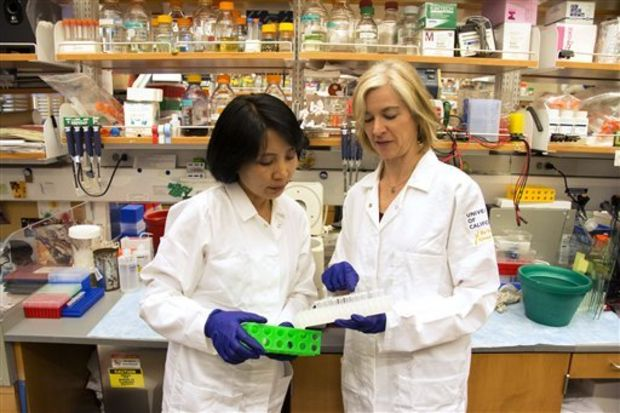 In this photo provided by UC Berkeley Public Affairs, taken June 20, 2014 Jennifer Doudna, right, and her lab manager, Kai Hong, work in her laboratory in Berkeley, Calif. The hottest tool in biology has scientists using words like revolutionary as they describe the long-term potential. Doudna helped develop new gene-editing technology and hears from desperate families, but urges caution in how it's eventually used in people. (Cailey Cotner/UC Berkeley via AP)