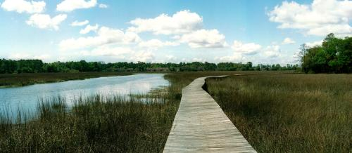 Coastal Georgia Marsh Path Walkway