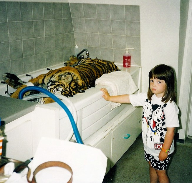 Dead tiger in bathtub