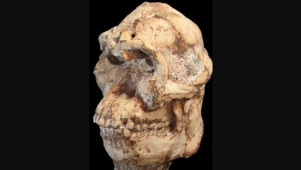 Australopithecus-little-foot