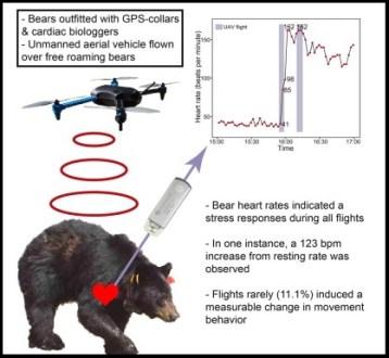 bears-drones-heartrate