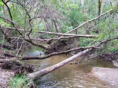branches on the river sized