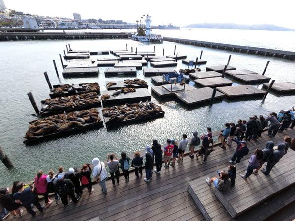 San Francisco - Pier 39 Sealions