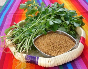 IS FENUGREEK PALEO