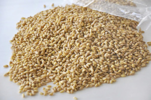 ARE WHEAT BERRIES PALEO