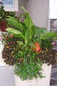 lush beautiful planters, canna lilies, gardening classes in Calgary, gardening services