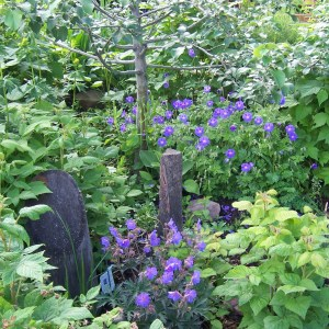 locally grown perennial sale from The Passionate Gardener