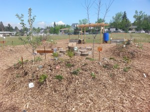 Fruit trees and bushes at the school garden