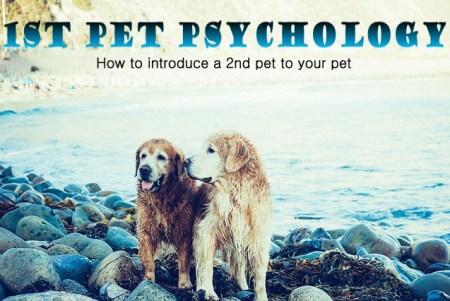 1st pet psych