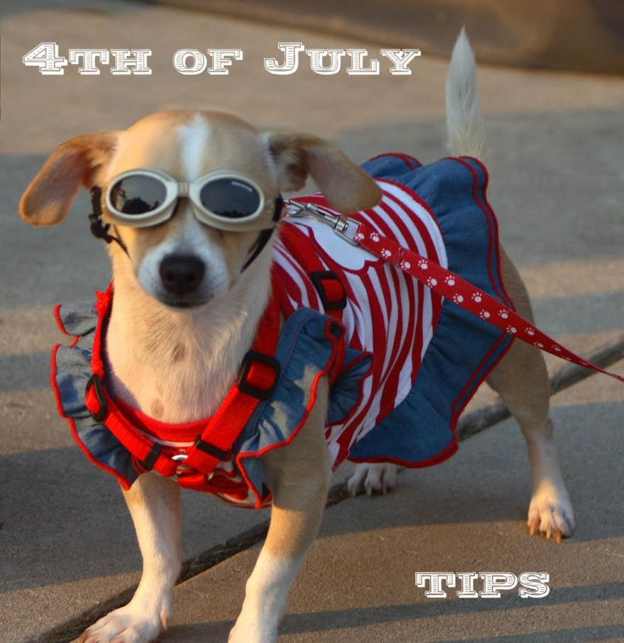 4th of July with Pets